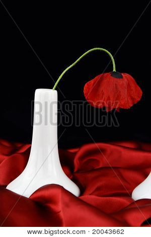 White Vase With Poppy Flower