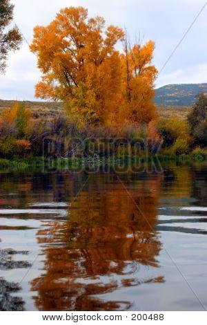 Autumn Trees On Padle Into Gore 2