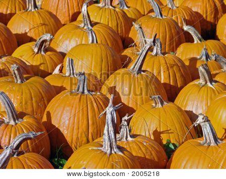 Pumpkin Background