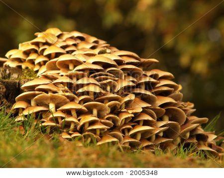 Mushrooms Around A Treetrunk