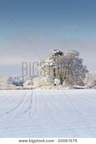 Snow Covered English Countryside