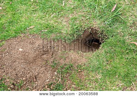 Gopher Hole