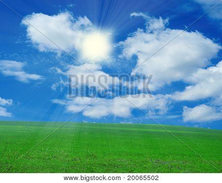 field of grass