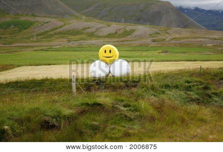 Smiling Hay Bales