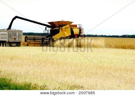 Combine And Truck Grain1