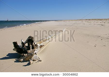 Driftwood On The Beach