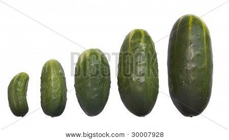 Small To Large Five Fresh Cucumbers