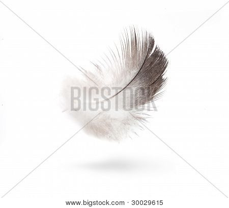 Art Dove White Feathers Isolated On White Background