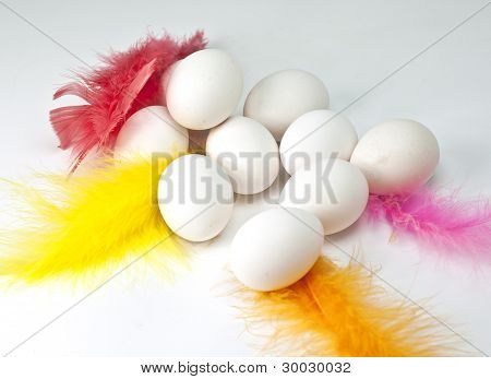 Eggs Surrounded By Colorful Feathers