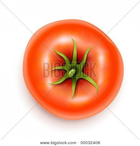 tomato with rootlet top side vector illustration isolated on white background gradient mesh used EPS10. Transparent objects used for shadows and lights drawing