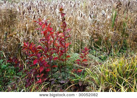 Autumn plants