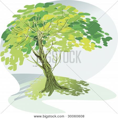 A Large Green Tree