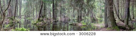 Natural Swampy Forest Panorama