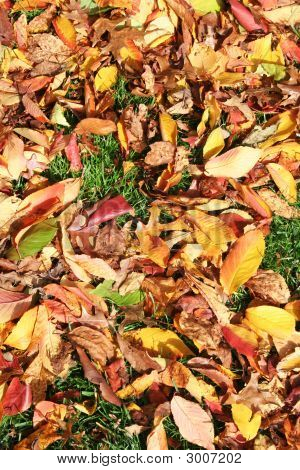 Fallen Leaves In Fall
