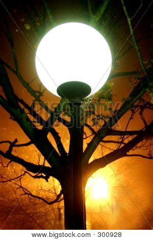 Lamp And Tree