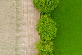 Aerial over half lush green grass and fallow dirt field with trees and hedgerow English countryside poster