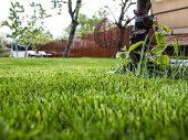 Green Grass In The Yard. A House And A Garden. Grass Lawn. Grass Mowing poster