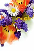 picture of easter flowers  - close - JPG