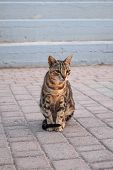 Beautiful Striped Shorthair Cat Sits On The Road poster