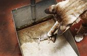 foto of dead mouse  - Cat and Mouse dead in silver bin - JPG