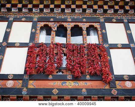 Drying the chillies