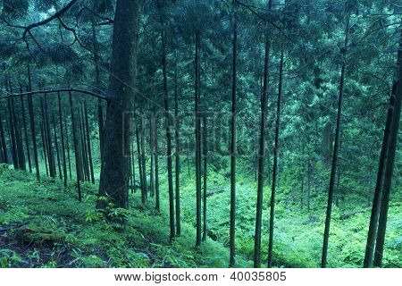 Deep Twilight Forest