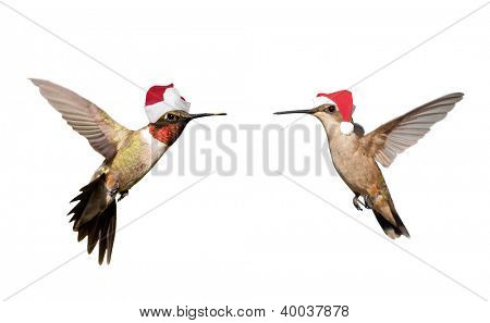 Two Hummingbirds in flight, wearing Santa hats; isolated on white