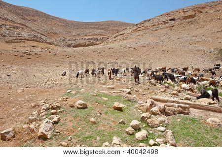 Mountains Of Samaria
