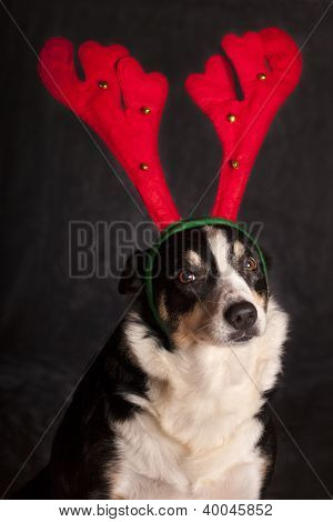 Funny dog with reindeer hat