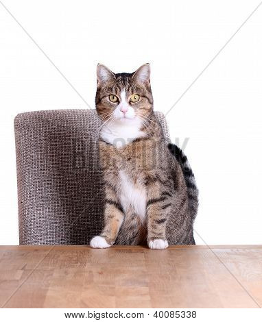 Cute Cat On Table