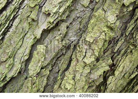 Abstract Bark Detail
