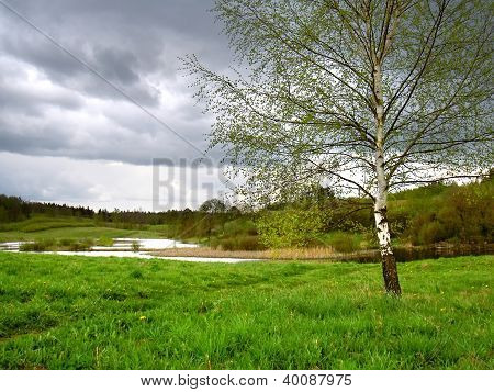 spring tree by the marsh