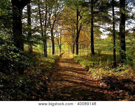 autumn road from forest