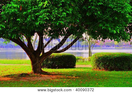 Big Tree In A Park With Village Background
