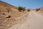 foto of samaria  - Meandering Road in Sand Hills of Samaria Israel - JPG