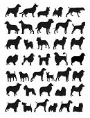 stock photo of greyhounds  - Many Dog Breeds in silhouettes - JPG
