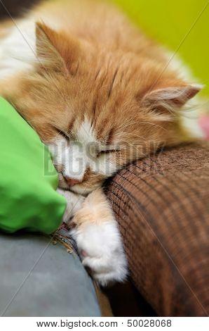 Orange Cat Asleep