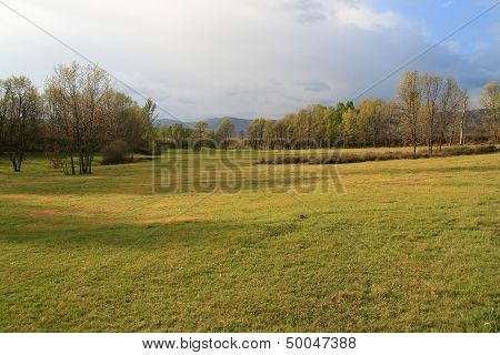 Grasslands with trees. Zamora.