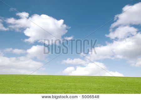 Dreamy Meadow