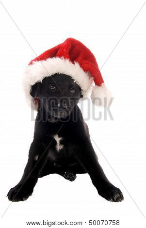 Black Puppy With Christmas Hat