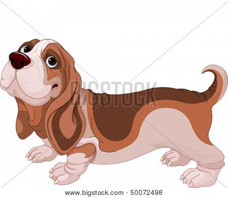 Illustration of Basset Hound breed dog