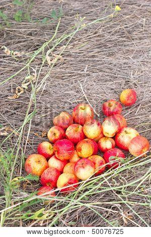 Many Small Apples