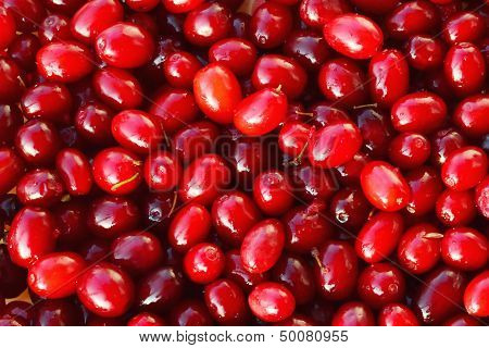 Cornelian Cherries - European Cornel Fruits