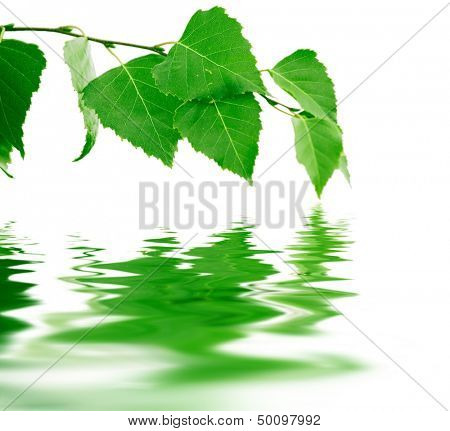 Green birch branch with reflections in smooth waves of water