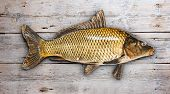 pic of freshwater fish  - Common carp fish on old wooden background - JPG