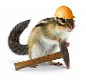 stock photo of chipmunks  - Funny chipmunk builder reconstruction  - JPG