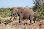 picture of veld  - Kruger park South Africa - JPG