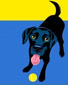 stock photo of lovable  - Illustration of a happy playful Black Labrador Retriever - JPG