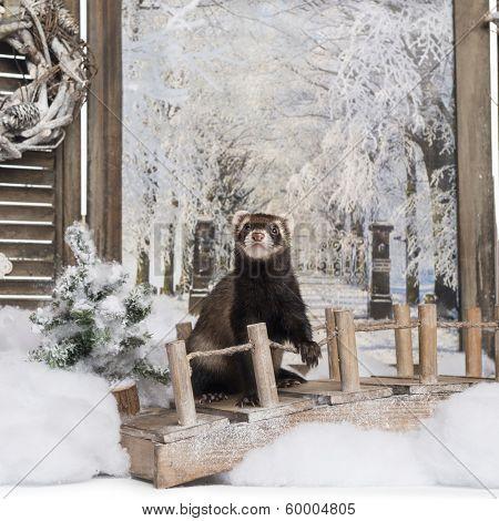 Ferret on a bridge in a winter scenery