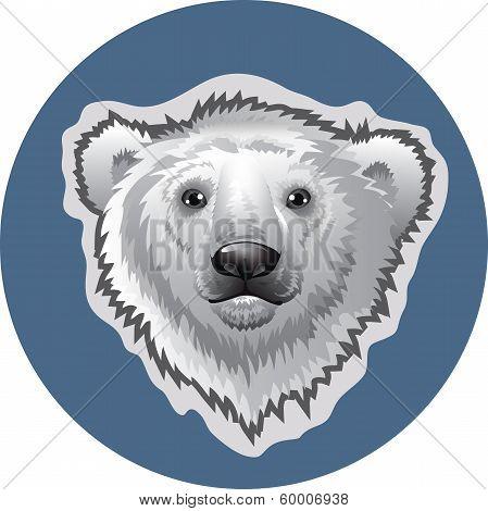 Head white polar bear